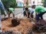 20161116 Planting of New School Tree
